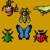 Insect Crush game