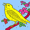 Yellow hungry canary coloring game